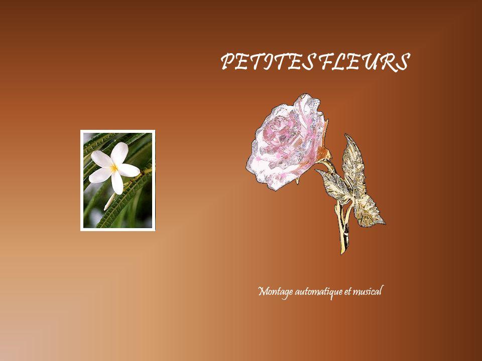 PETITES FLEURS Montage automatique et musical