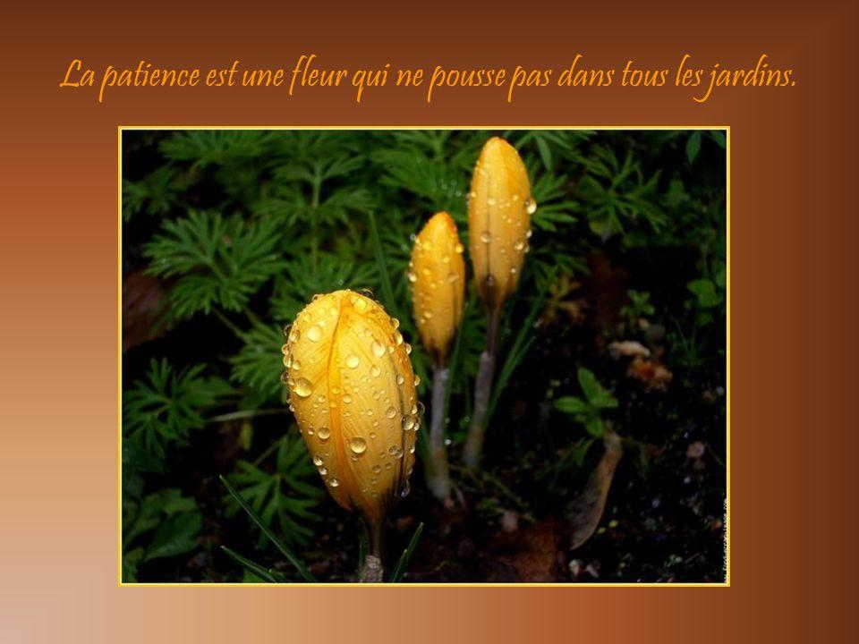 La patience est une fleur qui ne pousse pas dans tous les jardins.