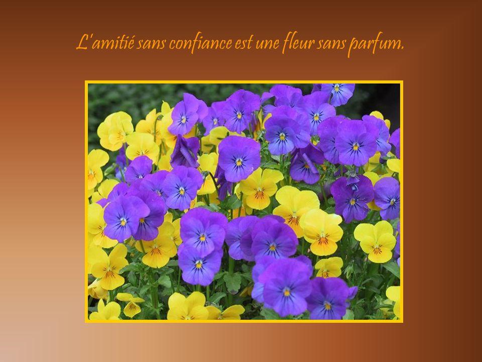 L'amitié sans confiance est une fleur sans parfum.