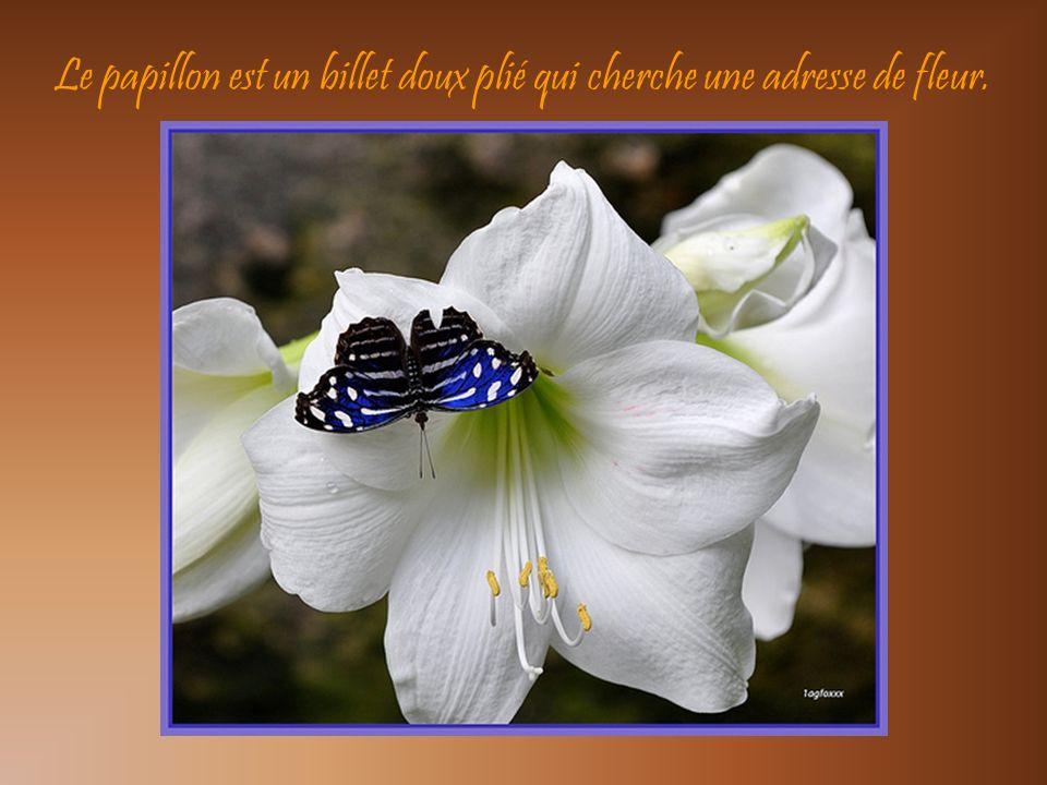 Le papillon est un billet doux plié qui cherche une adresse de fleur.