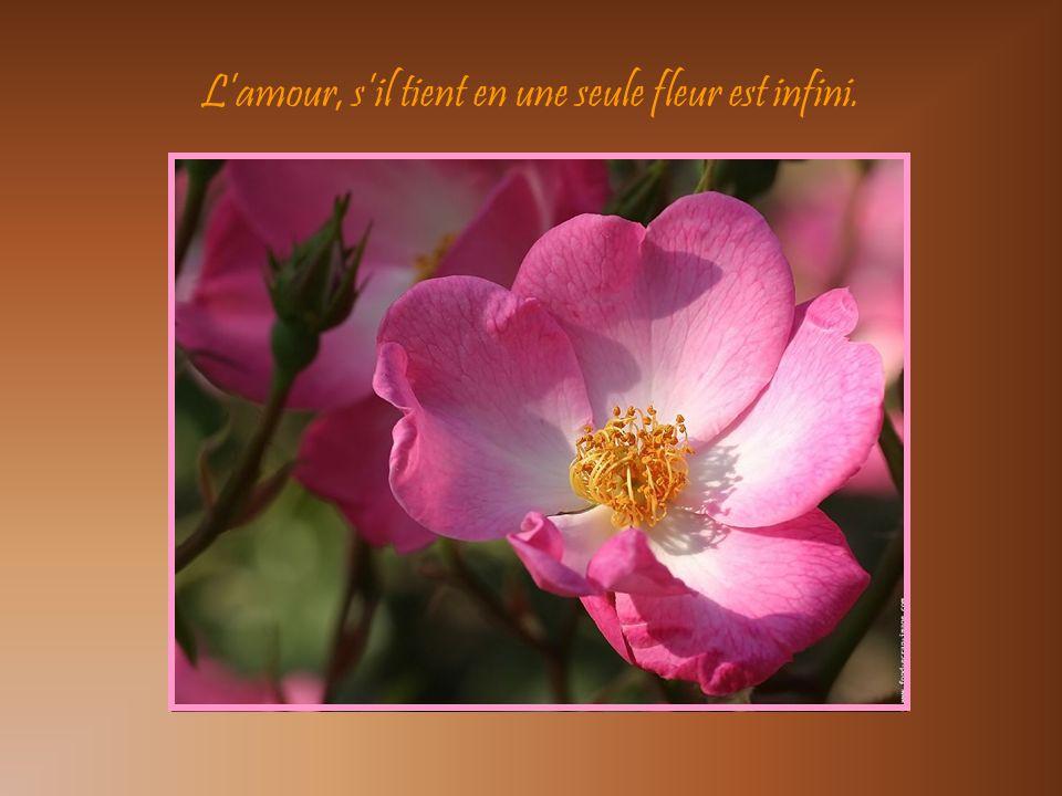 L'amour, s'il tient en une seule fleur est infini.