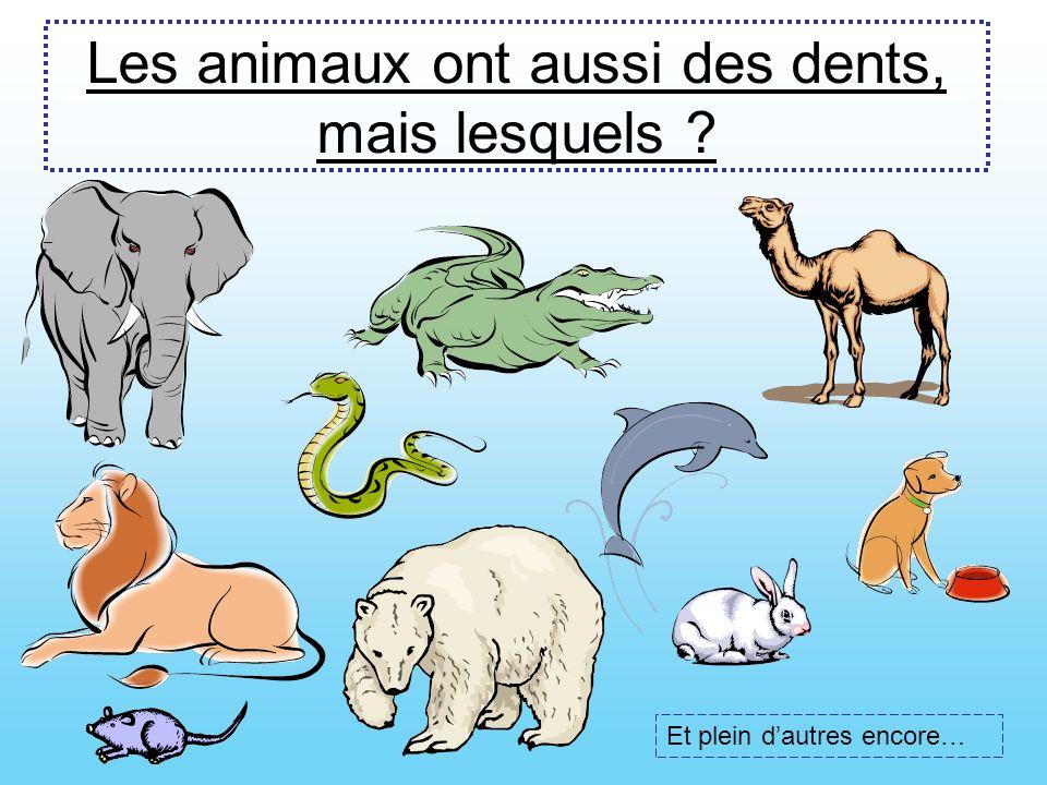 Les animaux ont aussi des dents, mais lesquels