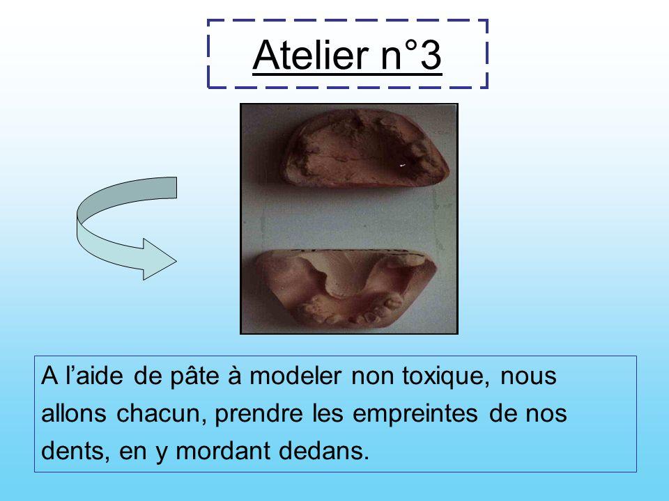 Atelier n°3 A l'aide de pâte à modeler non toxique, nous