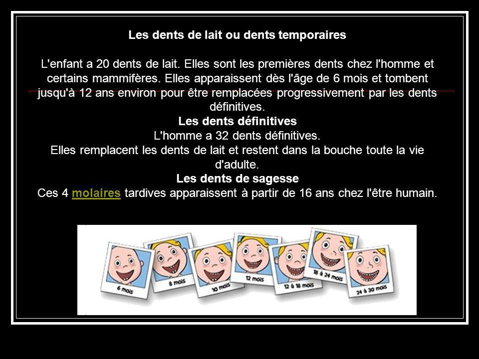 Les dents de lait ou dents temporaires