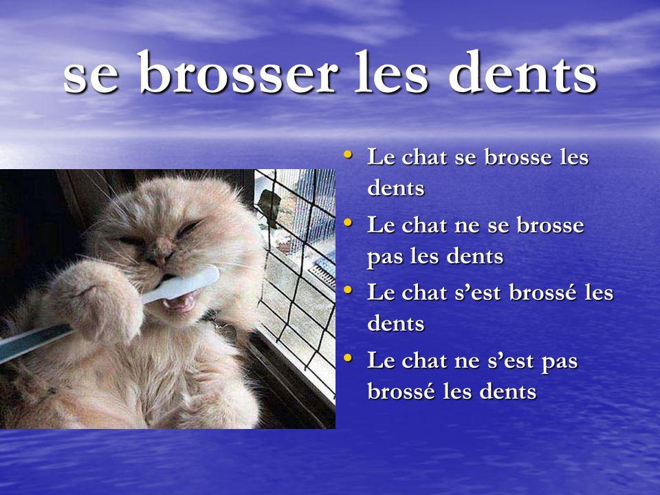 se brosser les dents Le chat se brosse les dents
