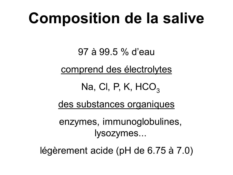 Composition de la salive