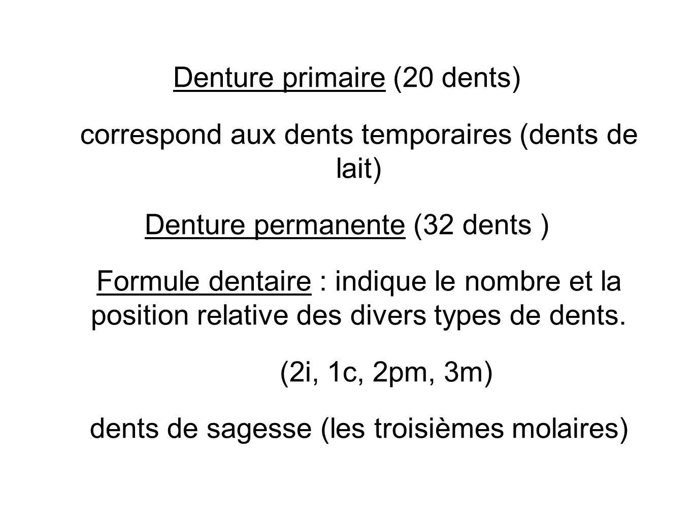 Denture primaire (20 dents)