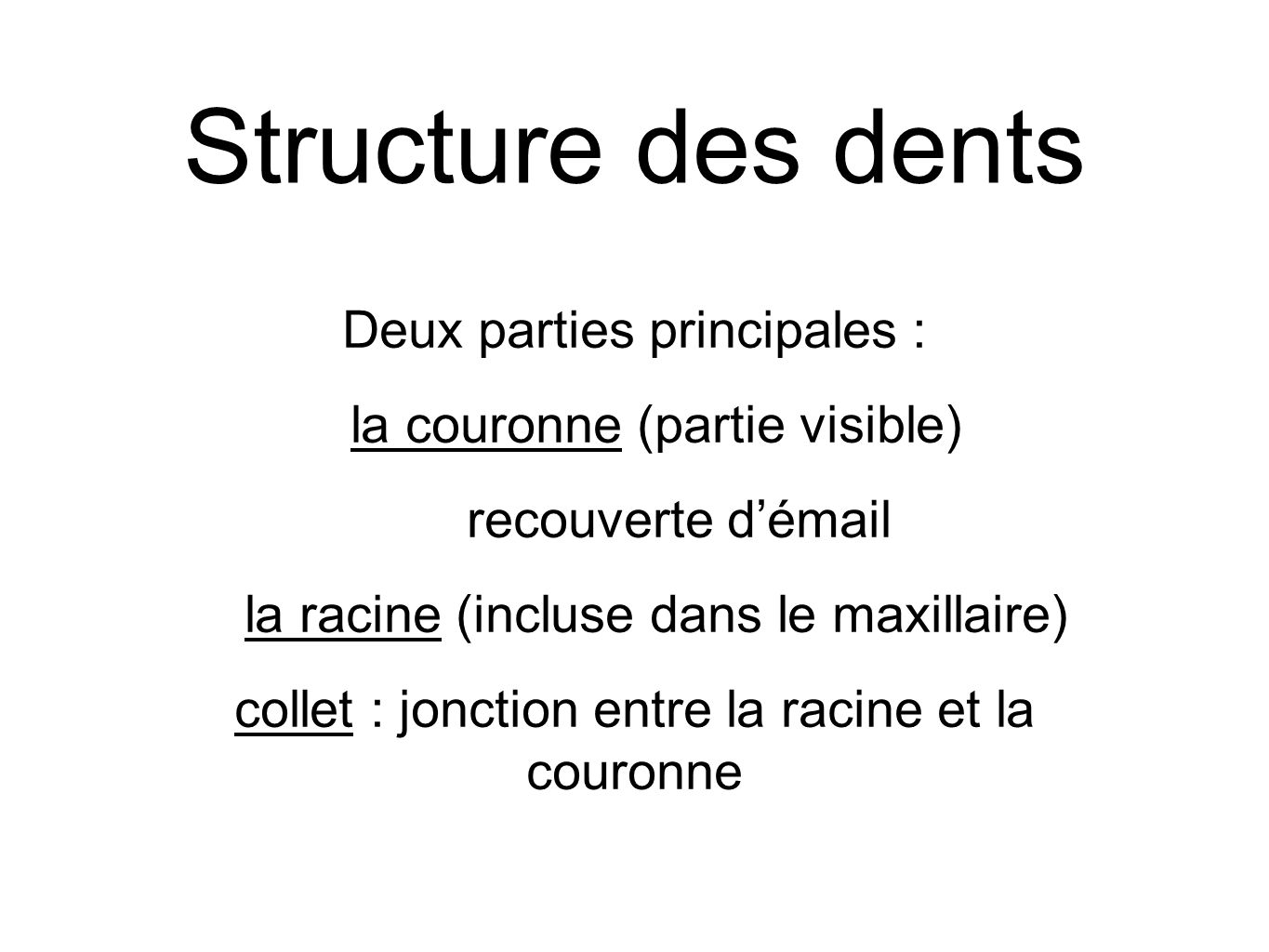 Structure des dents Deux parties principales :