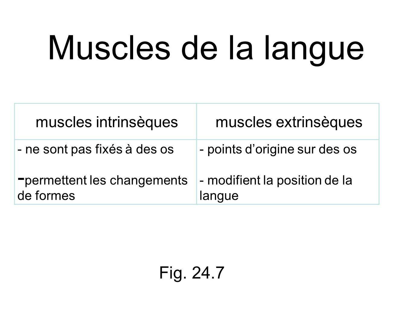 Muscles de la langue Fig. 24.7 muscles intrinsèques