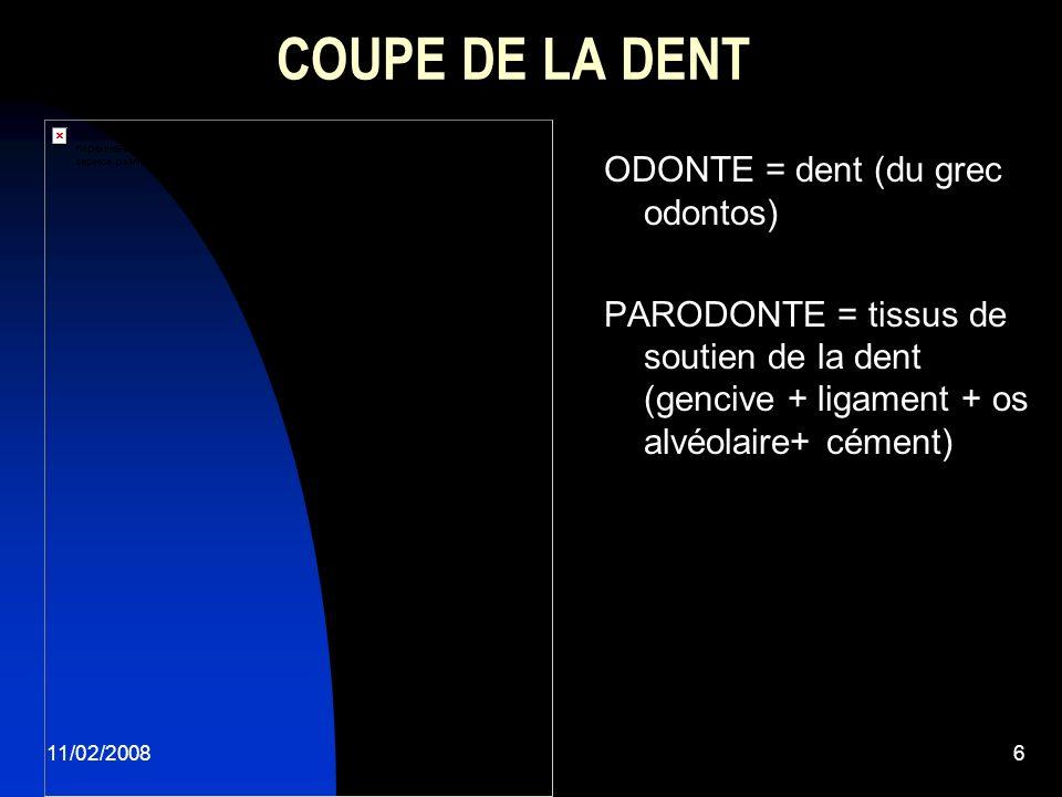 COUPE DE LA DENT ODONTE = dent (du grec odontos)