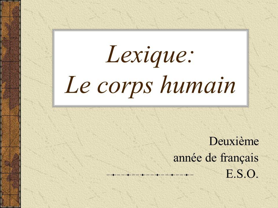 Lexique: Le corps humain