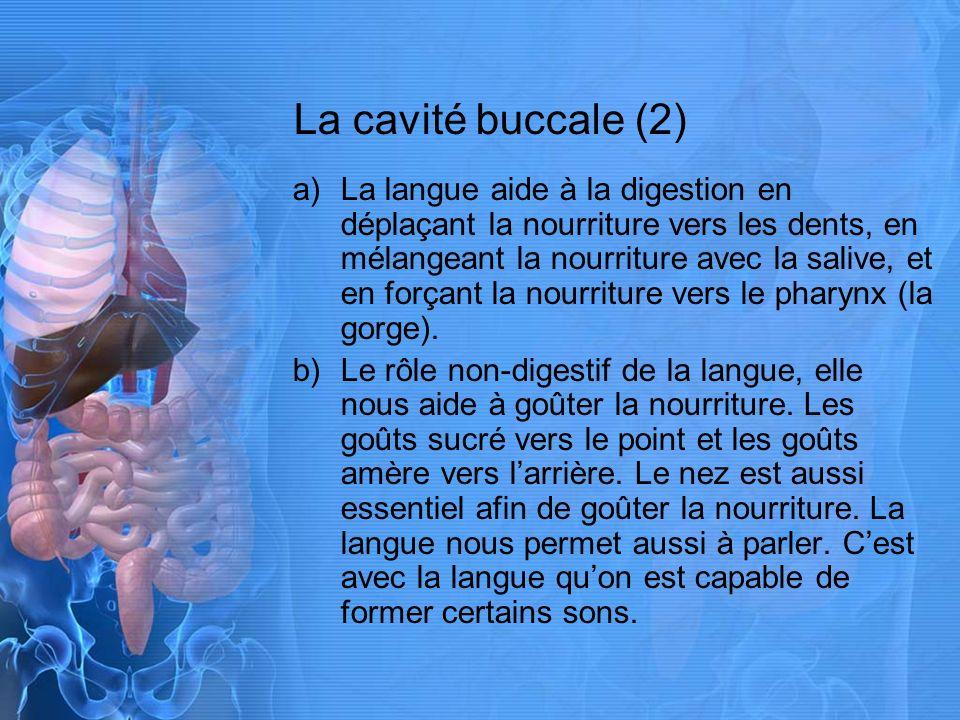 La cavité buccale (2)