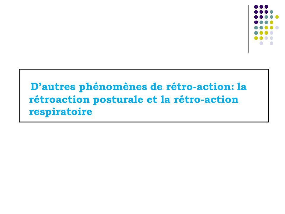 D'autres phénomènes de rétro-action: la rétroaction posturale et la rétro-action respiratoire