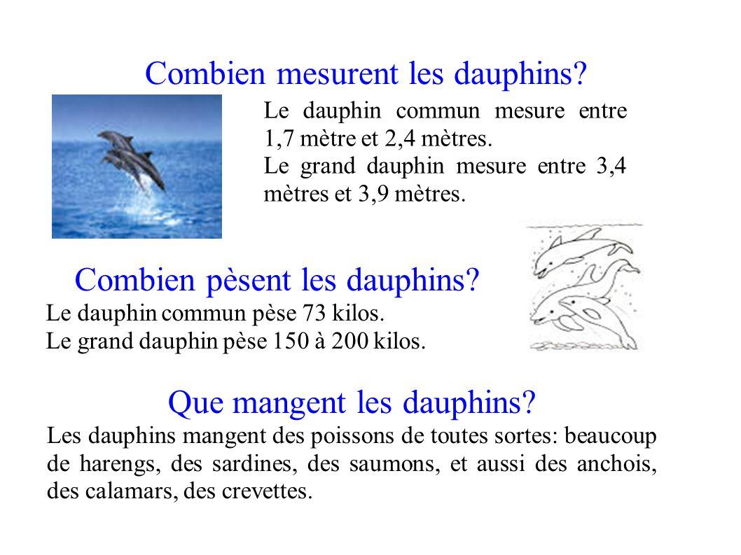 combien mesurent les dauphins ppt video online t l charger. Black Bedroom Furniture Sets. Home Design Ideas