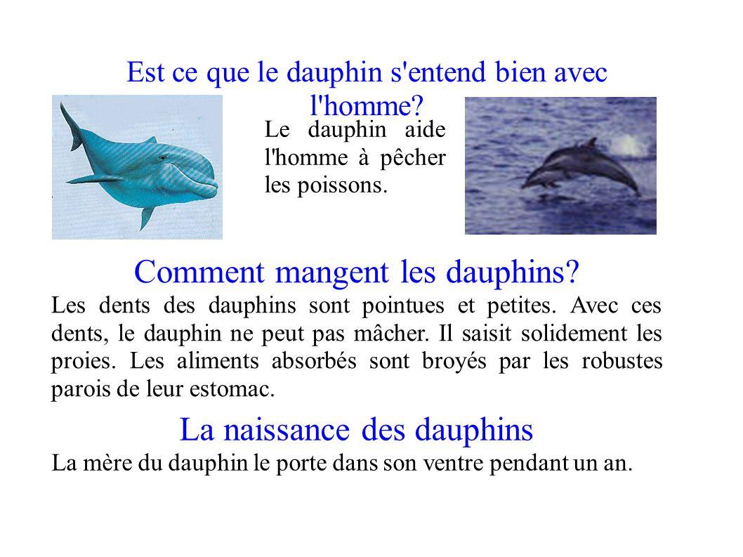 Combien mesurent les dauphins ppt video online t l charger - Comment pecher dans un port ...