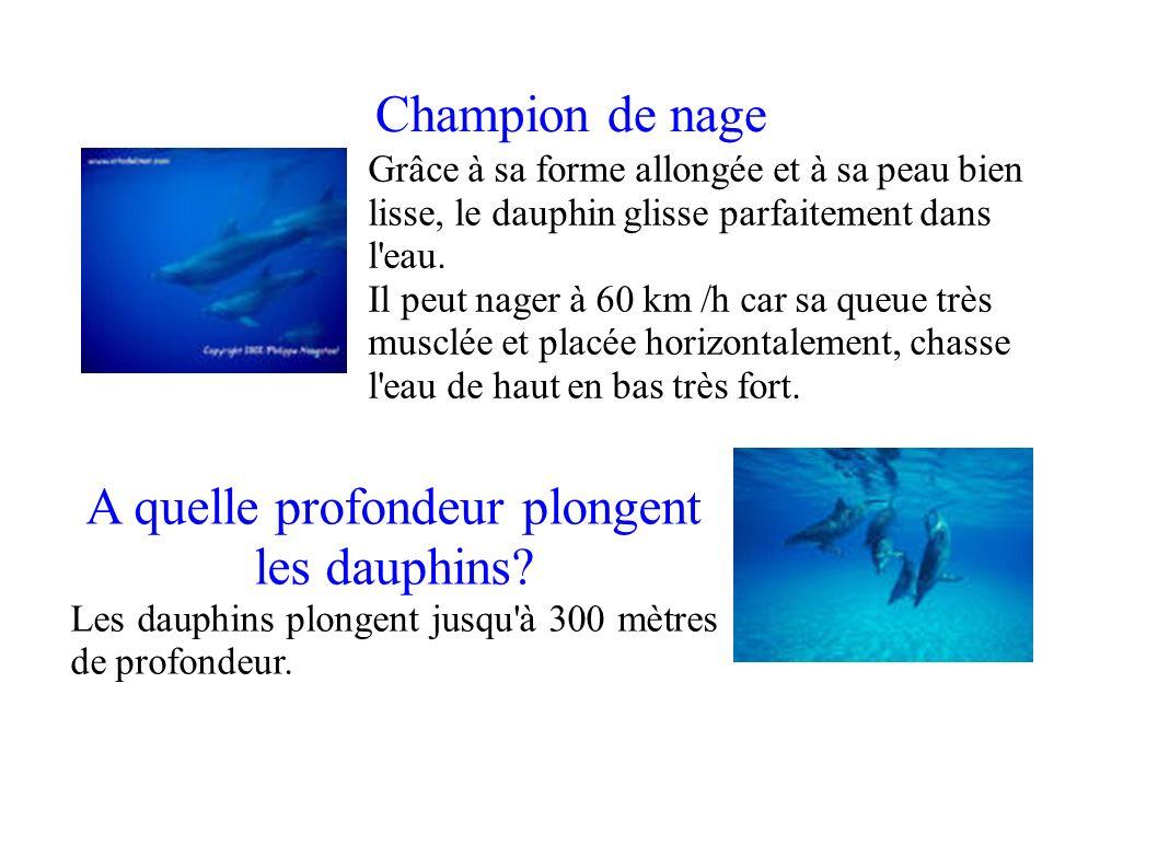 A quelle profondeur plongent les dauphins