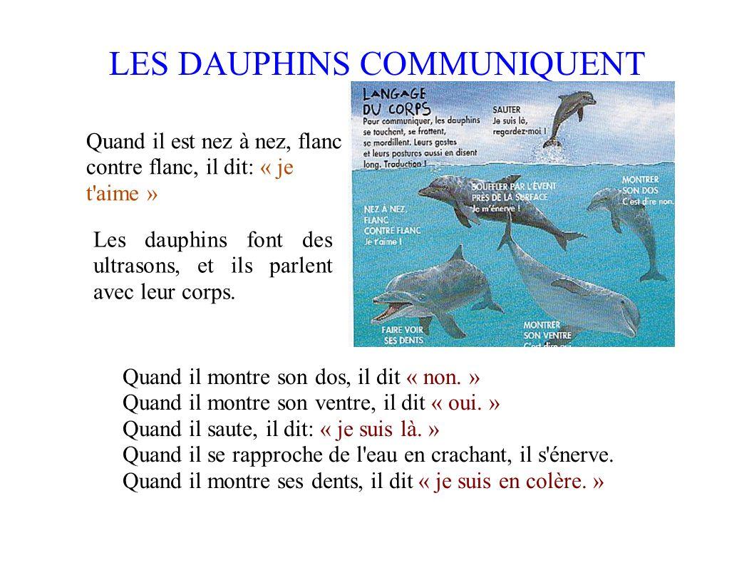 LES DAUPHINS COMMUNIQUENT