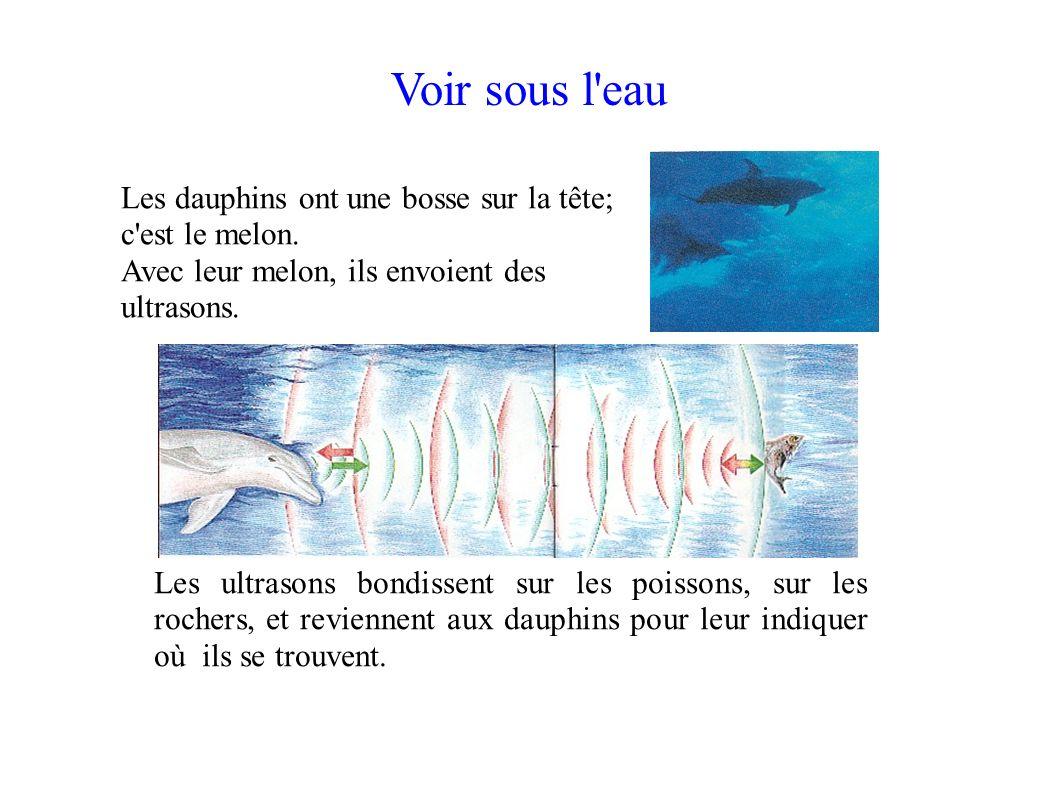 Voir sous l eau Les dauphins ont une bosse sur la tête; c est le melon. Avec leur melon, ils envoient des ultrasons.