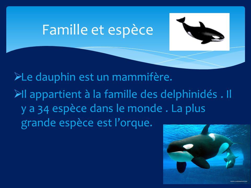 Famille et espèce Le dauphin est un mammifère.