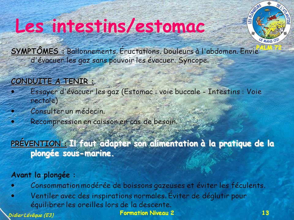 Les intestins/estomac
