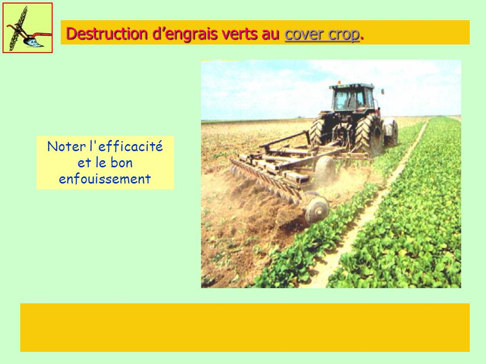 Destruction d'engrais verts au cover crop.