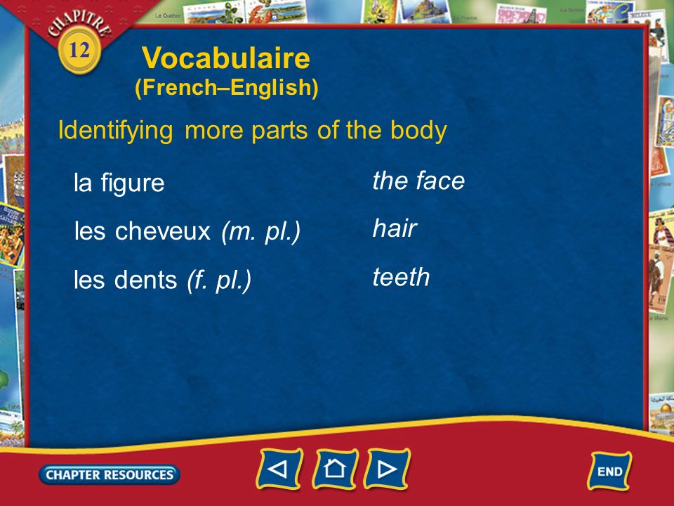 Vocabulaire Identifying more parts of the body the face la figure hair
