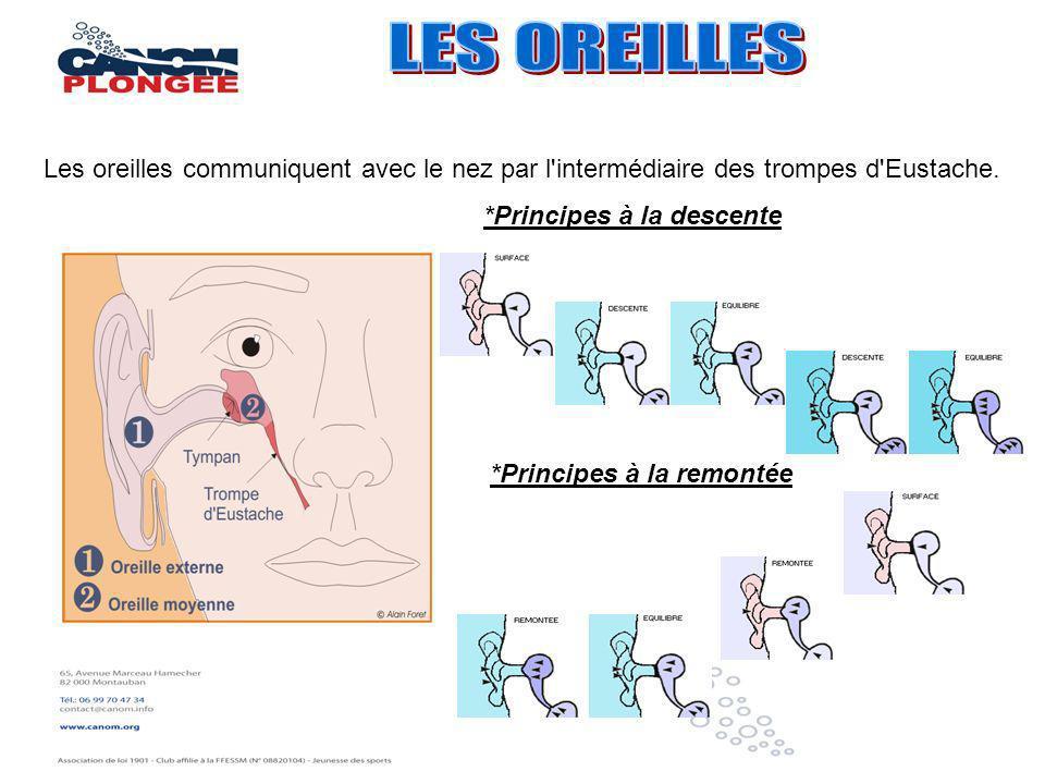 LES OREILLESLes oreilles communiquent avec le nez par l intermédiaire des trompes d Eustache. *Principes à la descente.