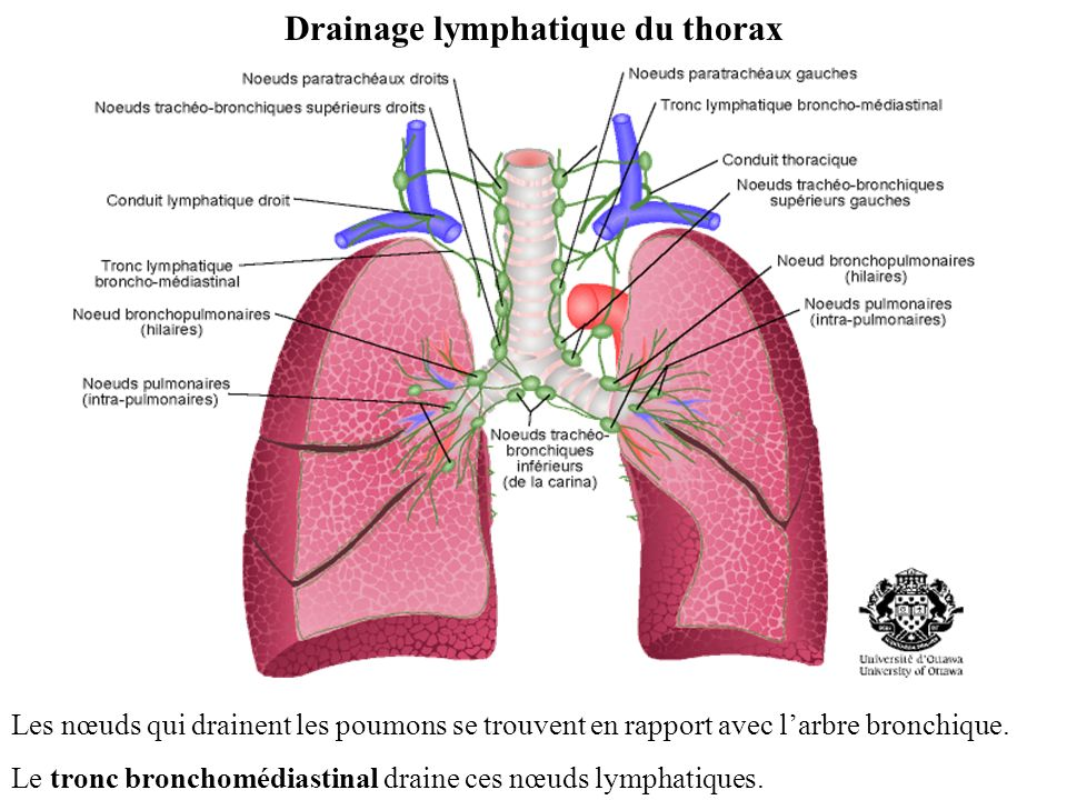 Drainage lymphatique du thorax