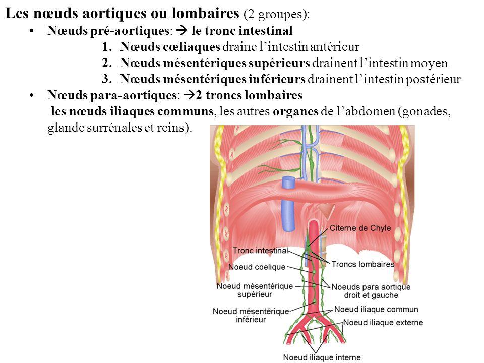 Les nœuds aortiques ou lombaires (2 groupes):