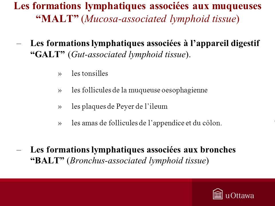 Les formations lymphatiques associées aux muqueuses