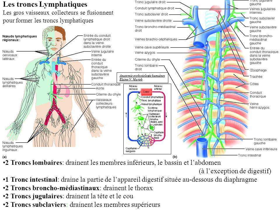 Les troncs Lymphatiques
