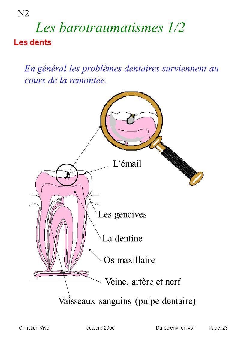Vaisseaux sanguins (pulpe dentaire)