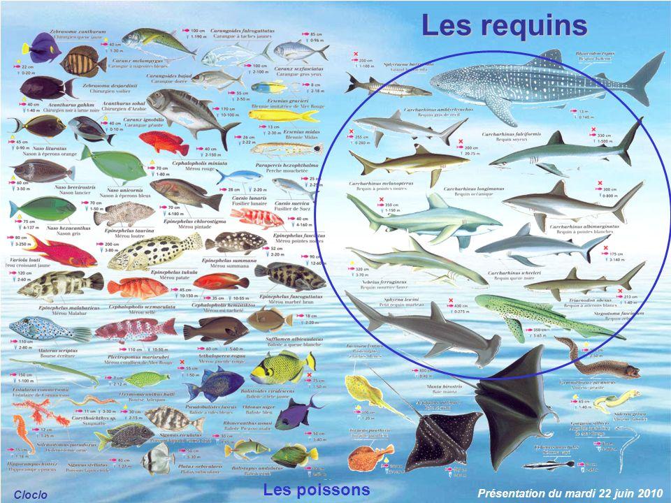 Les requins Les poissons Cloclo Présentation du mardi 22 juin 2010