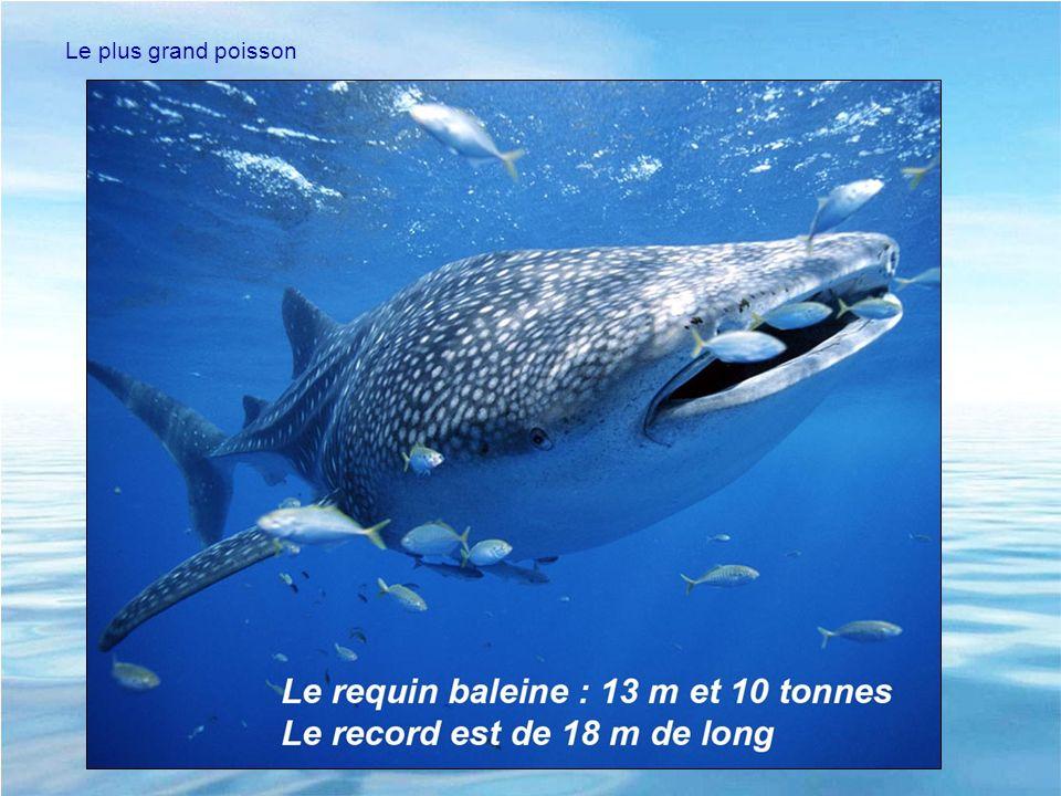 Le plus grand poisson Records pour illustrer la biodiversité et l'adaptation au milieu. - Plus grand => requin baleine moyenne 7-15 m 10 tonnes.