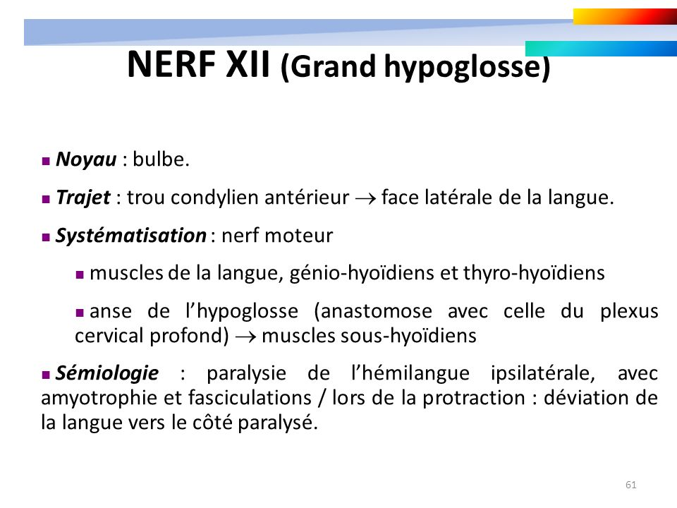 NERF XII (Grand hypoglosse)