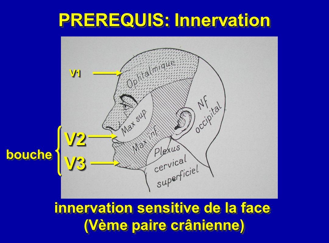 PREREQUIS: Innervation V2 V3