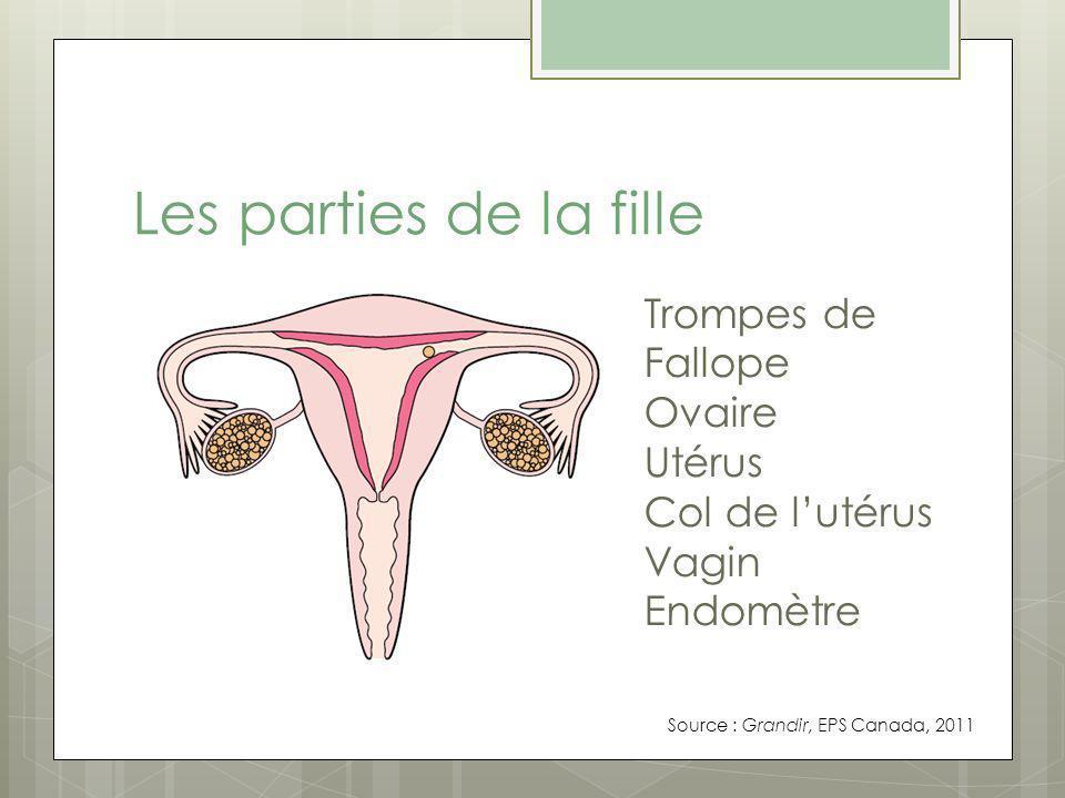 Les parties de la fille Trompes de Fallope Ovaire Utérus