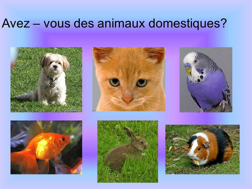 Avez – vous des animaux domestiques