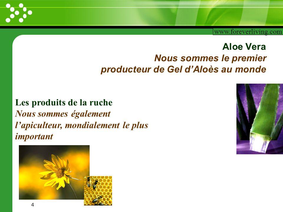 Aloe Vera Nous sommes le premier producteur de Gel d'Aloès au monde