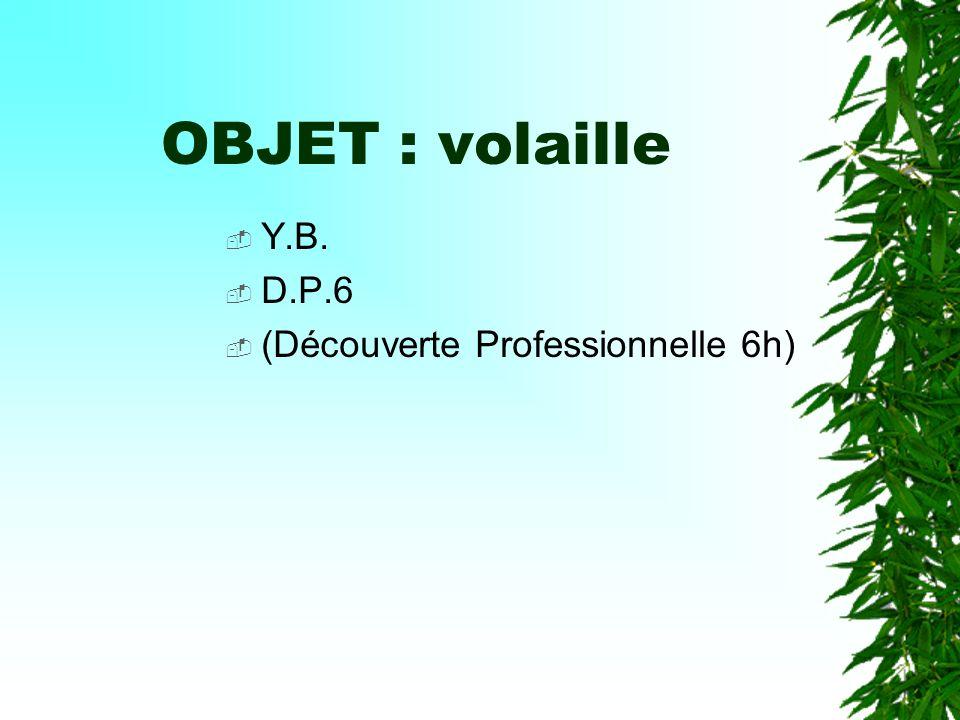 OBJET : volaille Y.B. D.P.6 (Découverte Professionnelle 6h)