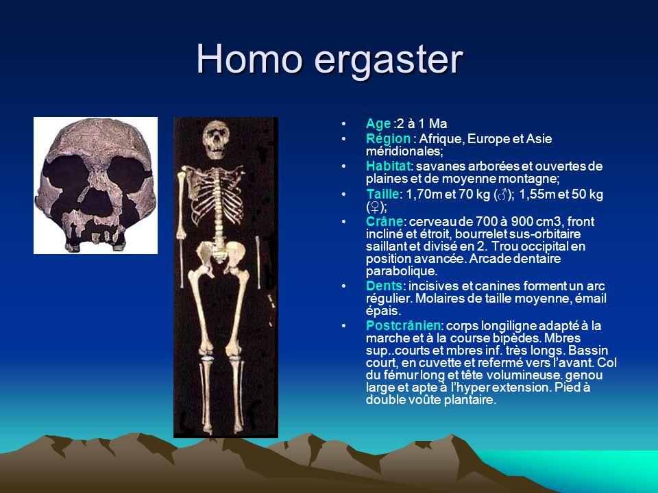 Homo ergaster Age :2 à 1 Ma. Région : Afrique, Europe et Asie méridionales;