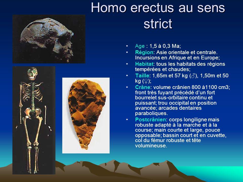 Homo erectus au sens strict
