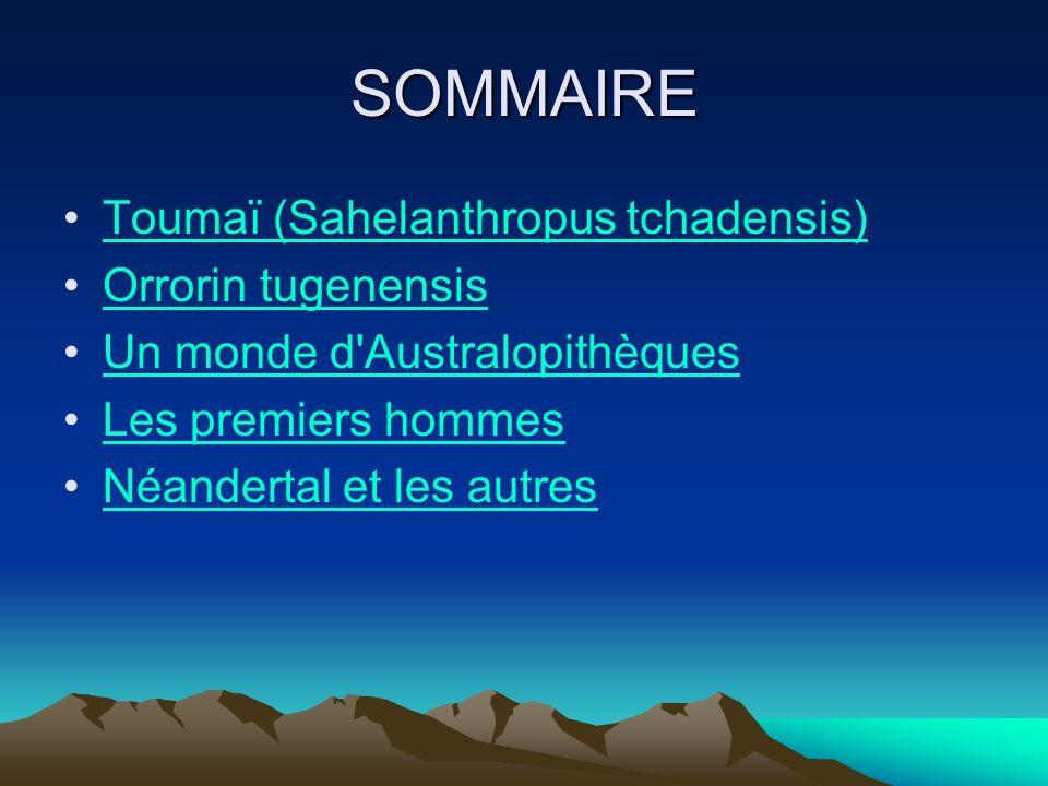 SOMMAIRE Toumaï (Sahelanthropus tchadensis) Orrorin tugenensis
