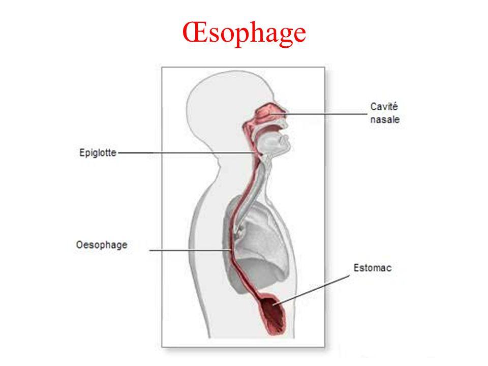 Œsophage