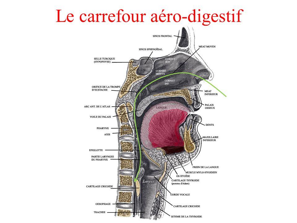 Le carrefour aéro-digestif