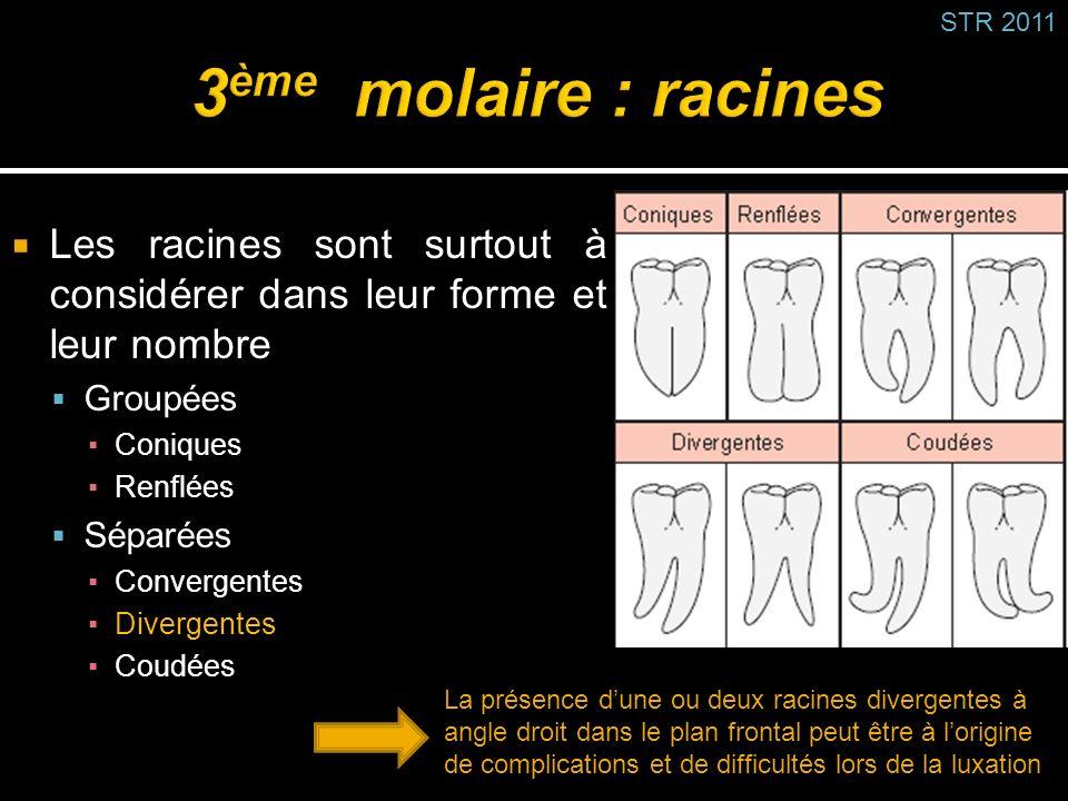STR 2011 3ème molaire : racines. Les racines sont surtout à considérer dans leur forme et leur nombre.