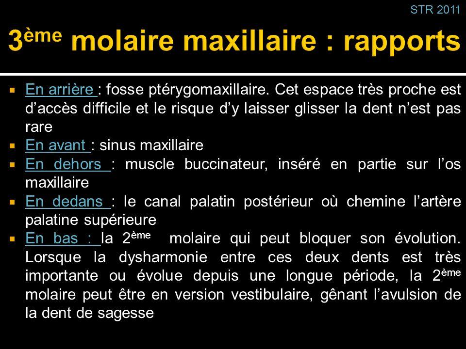3ème molaire maxillaire : rapports