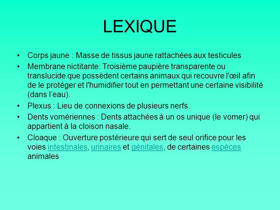 LEXIQUE Corps jaune : Masse de tissus jaune rattachées aux testicules