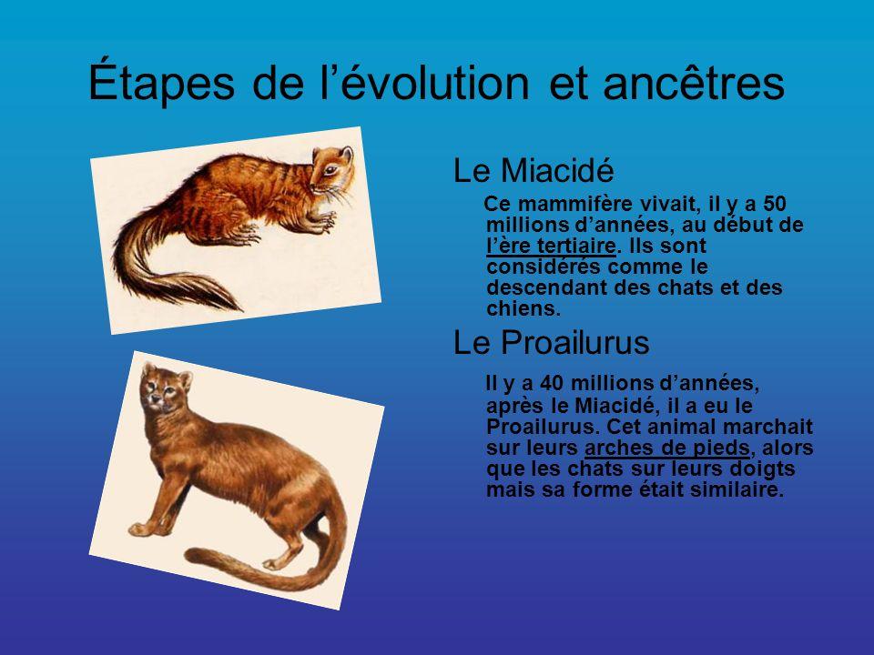 Étapes de l'évolution et ancêtres
