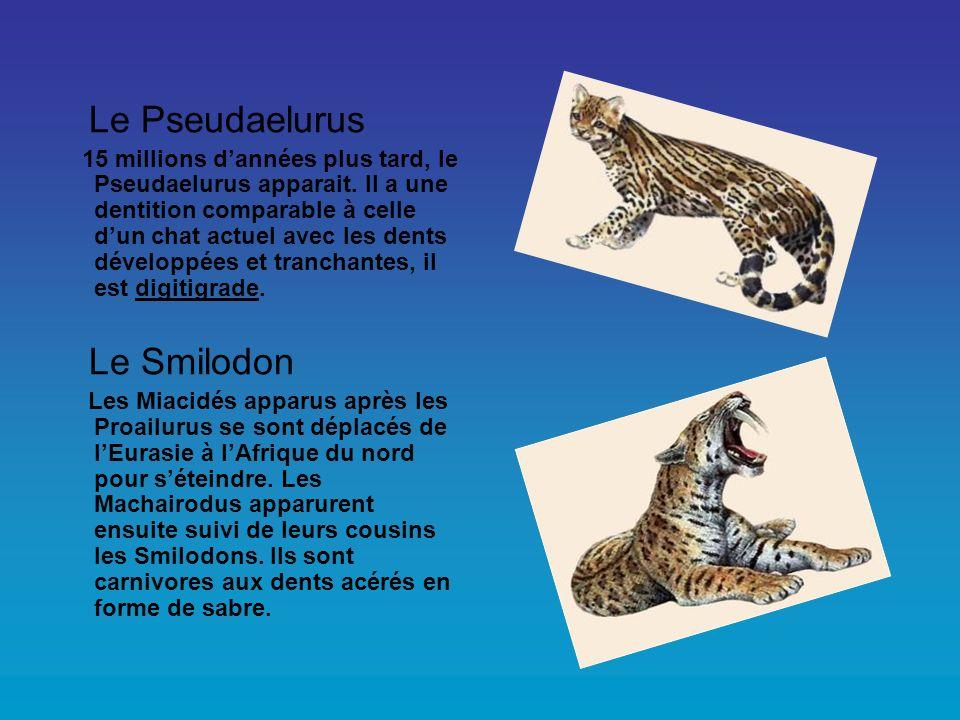 Le Pseudaelurus Le Smilodon